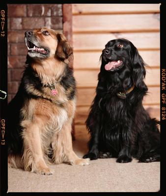 Negative: Debbie Cooke's Two Dogs