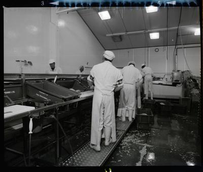 Negative: Pacifica Fish Factory