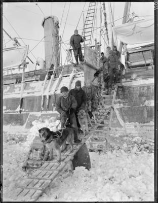 Photographic negative: Disembarking dogs from 'Endurance' in pack ice