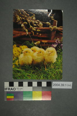 Postcard of baby chicks