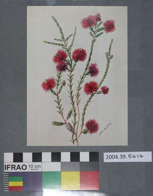 Postcard of red flowers