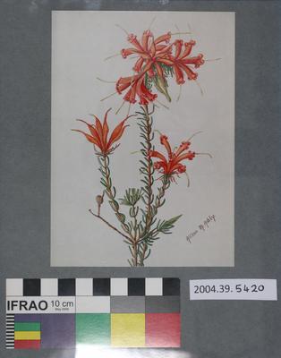Postcard of orange flowers