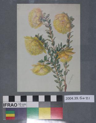 Postcard of yellow flowers