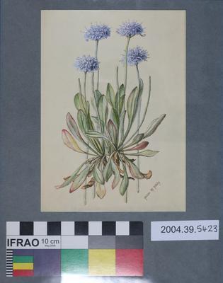 Postcard of blue flowers