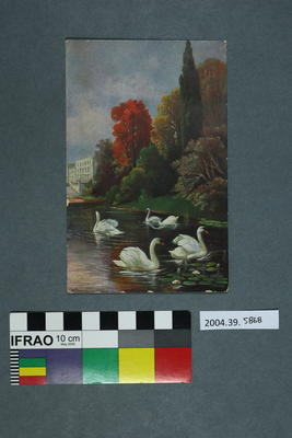 Postcard of swans in a body of water