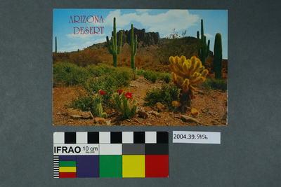 Postcard: Arizona Desert