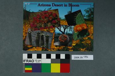 Postcard: Arizona Desert in Bloom