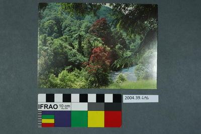 Postcard of a bush scene