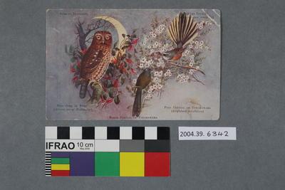 Postcard of New Zealand birds and vegetation