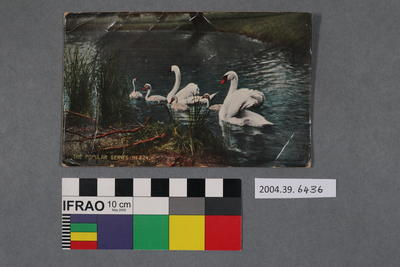 Postcard of a family of swans