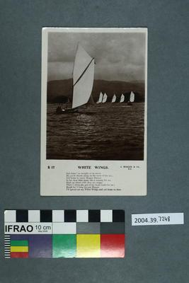 Postcard: White Wings; 2004.39.7248