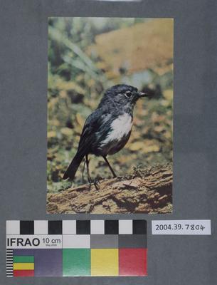 Postcard: Robin