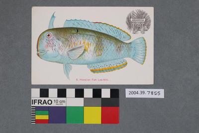 Postcard: Hawaiian Fish