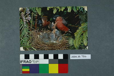 Postcard: Nestlings