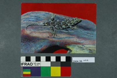 Postcard: Gecko on a rock
