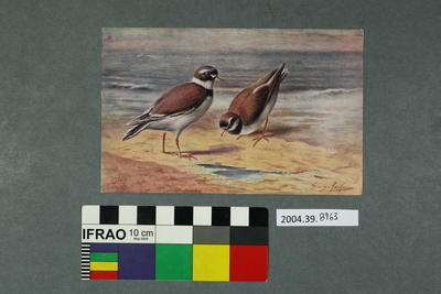 Postcard of two birds