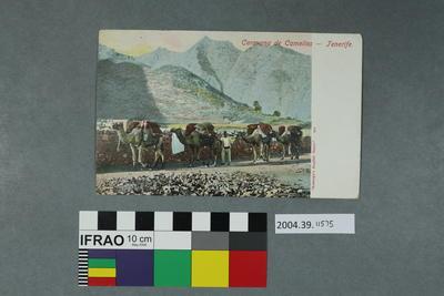 Postcard: Caravana de Camelios, Tenerife