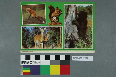 Postcard: Canadian Wildlife