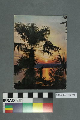Postcard: Palm trees and sunrise or sunset