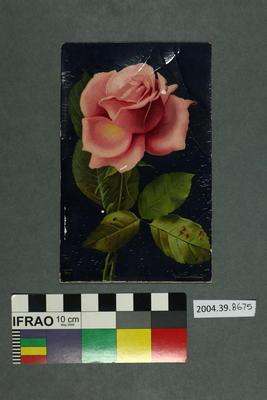 Postcard: Pink rose