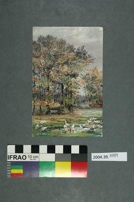 Postcard: Geese