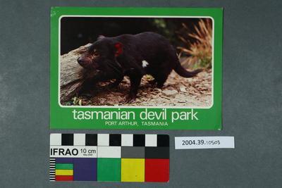 Postcard: Tasmanian Devil Park