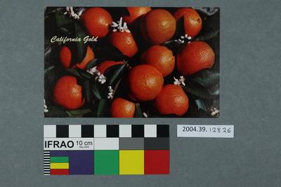 Postcard: California Gold