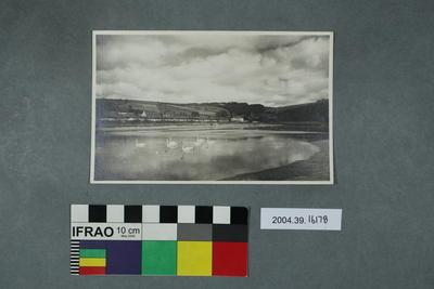 Postcard: Lake with white swans