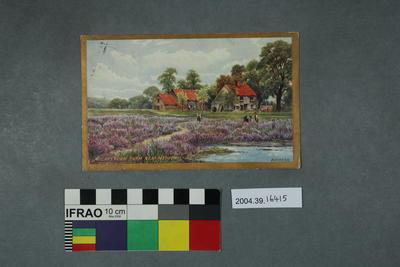 Postcard: A Lavender Farm near Merton