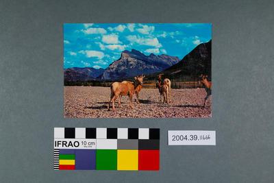 Postcard of Banff, Alberta