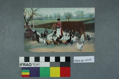 Postcard: Feeding Time