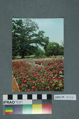Postcard: Im Wörlitzer Landschaftspark, Roseninsel
