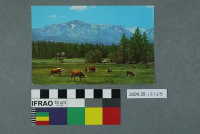 Postcard: Mt Tallac