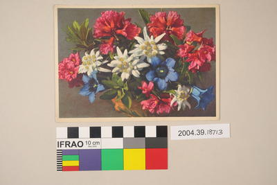 Postcard: Leontopodium alpinum, Gentiana kochiana, and Rhododendron ferrugineum