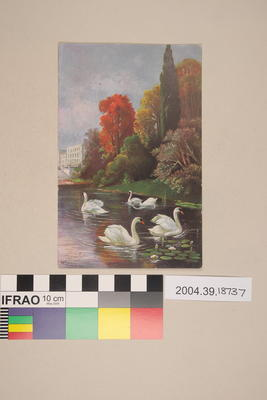 Postcard of swans on water