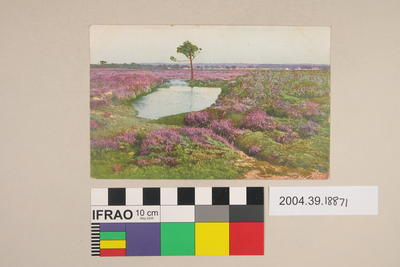 Postcard of a pond and purple flowers