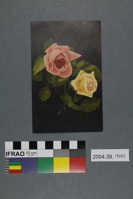 Postcard of roses on black