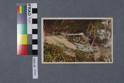 Postcard: Shanklin Chine, I.O.W.