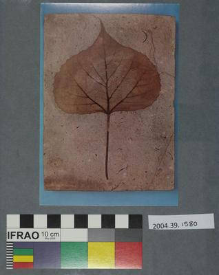 Postcard of a fossilised popular leaf