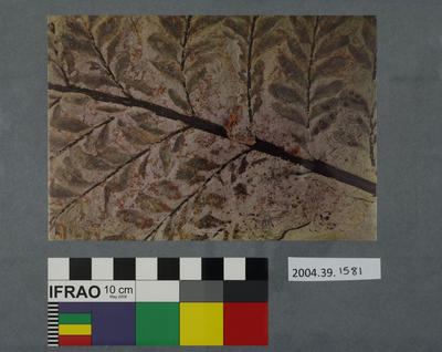 Postcard of a fossilised branch
