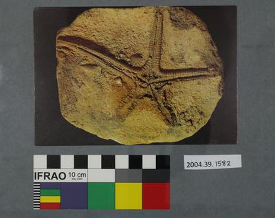 Postcard of a fossilised starfish