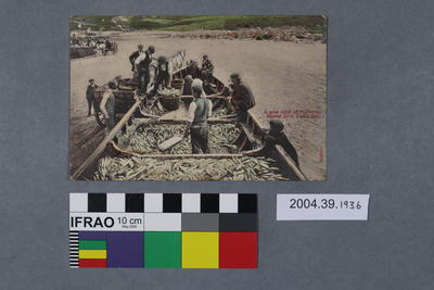 Postcard: A good catch of Pilchards, Senner Cove, Land's End