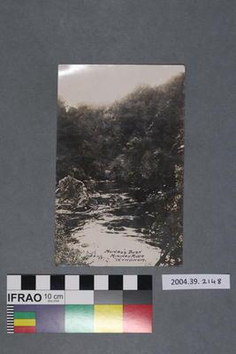 Postcard: Munro's Bush