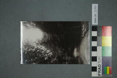 Postcard: Burnham Beeches