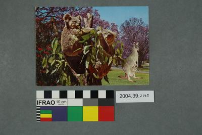 Postcard of Australian animals
