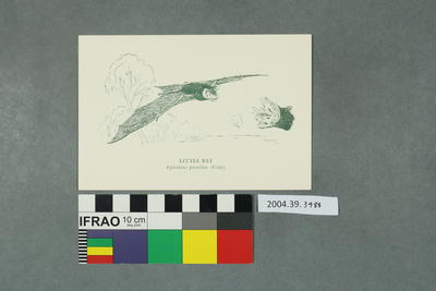 Postcard: Little Bat