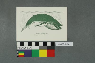 Postcard: Humpback Whale