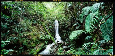 Transparency: Waterfall West Coast