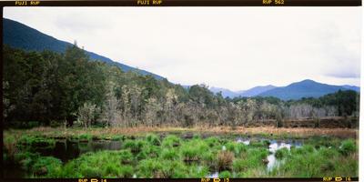 Transparency: Duck Habitat West Coast