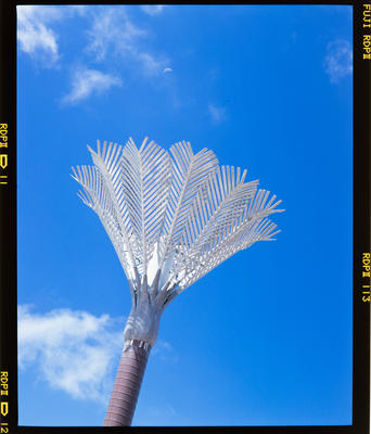 Transparency: Nikau Palm Sculpture Wellington